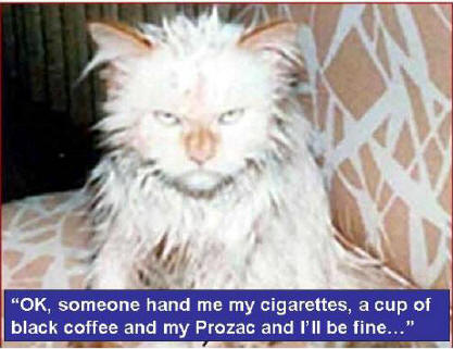 joke cat wants coffee