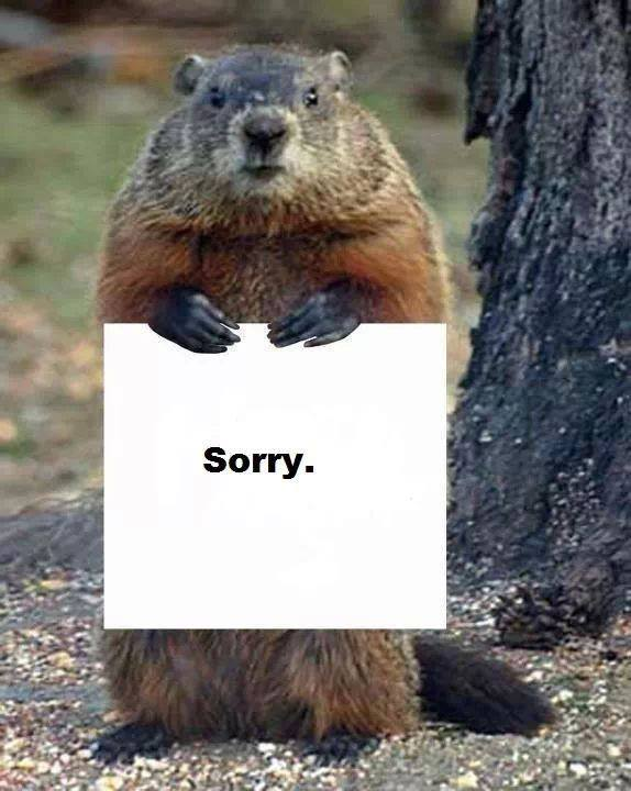 Stupid Groundhog