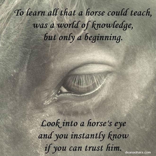trust a horse