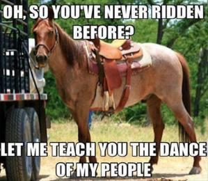 funny-horse-pictures-captions