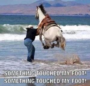 horse water running